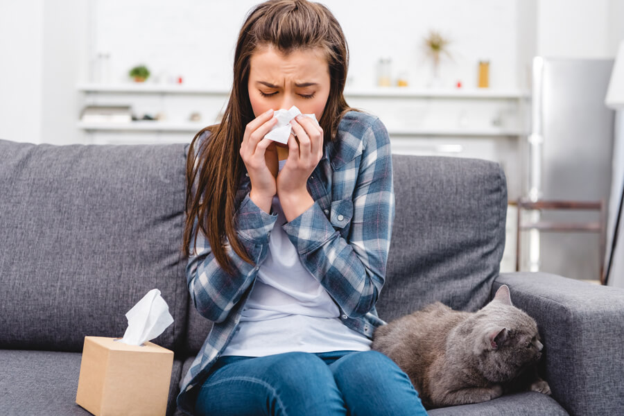 Un vaccin contre les allergies au chat